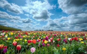 portada campo de flores